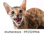 rex   Shutterstock . vector #491524966