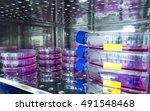 various mammalian cells are...   Shutterstock . vector #491548468