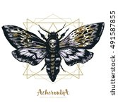 death's head hawk moth and... | Shutterstock .eps vector #491587855
