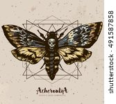 death's head hawk moth and... | Shutterstock .eps vector #491587858