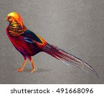 Golden Pheasant Drawing. Golde...