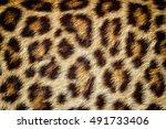 real jaguar skin for background ... | Shutterstock . vector #491733406
