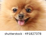 Pomeranian Dog Sitting On...