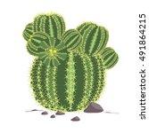 Echinocactus Grusonii Isolated...