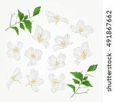 jasmine flowers with twigs set... | Shutterstock .eps vector #491867662