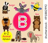 cute children zoo alphabet b... | Shutterstock .eps vector #491882992