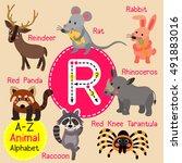 cute children zoo alphabet r... | Shutterstock .eps vector #491883016