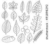 vector set of leaves | Shutterstock .eps vector #491898292