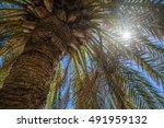 sun rays shine and flare... | Shutterstock . vector #491959132