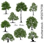 beautiful tree on a white... | Shutterstock .eps vector #492074758