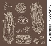 collection of corn . hand drawn | Shutterstock .eps vector #492092446