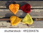 Four Multicolored Autumn Leave...
