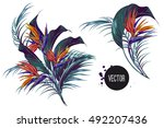 bouquet with tropical flowers ... | Shutterstock .eps vector #492207436