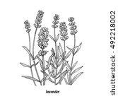 flower lavender. vector... | Shutterstock .eps vector #492218002