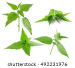 Collection Of Nettle Isolated...