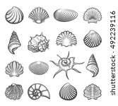 vector hand drawn sea shell set.... | Shutterstock .eps vector #492239116