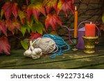 still life in autumn garden... | Shutterstock . vector #492273148