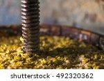 grape harvest  wine press with...
