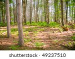 forest trail  bright green... | Shutterstock . vector #49237510