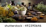 fresh medicinal  healing herbs... | Shutterstock . vector #492390646