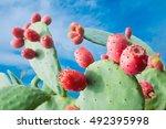 Prickly Pear Cactus  Opuntia ...