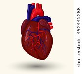 human heart  cartoon style... | Shutterstock .eps vector #492445288