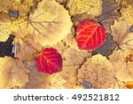 natural background from autumn... | Shutterstock . vector #492521812