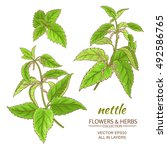 nettle plant vector set on... | Shutterstock .eps vector #492586765