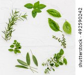 various fresh herbs from the... | Shutterstock . vector #492590242