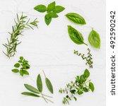 various fresh herbs from the... | Shutterstock . vector #492590242
