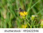 Small photo of Cartoon-ish Bee
