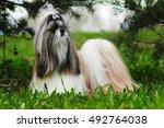 Beautiful Decorative Dog Breed...