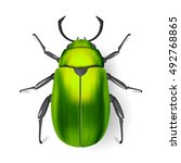 green beetle. insect.... | Shutterstock .eps vector #492768865