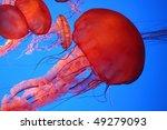Beautiful Jelly Fish Moving...
