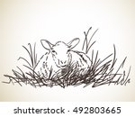 Sketch Of Sheep Lying In Grass...
