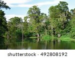 Swamp Water And Tree In New...