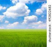 green grass on sky background | Shutterstock . vector #492822682