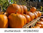 Pumpkin Patch Farm Series  ...