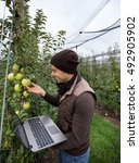 Small photo of Attractive agronomist with laptop standing in apple orchard and checking fruit