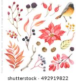 Stock vector collection of design floral elements redstart bird flower poinsettia blackberry barberry rose 492919822