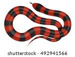 coral snake vector illustration.... | Shutterstock .eps vector #492941566