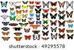 Stock vector big vector collection of butterflies 49295578