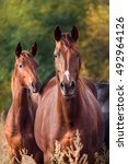 Horse In Herd Outdoor Against...