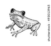 Sketch Of Doodle Frog.