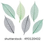 mulberry leaves skeletons... | Shutterstock . vector #493120432
