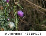 Bumblebee Flying Near Prickly...