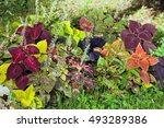 Autumn Colorful Leaves Plants ...