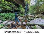 Rainforest Wilderness Area With ...