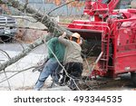 tree removal and worker moving... | Shutterstock . vector #493344535