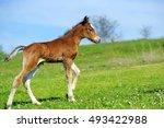 Little Cute Colt Walk On Spring ...